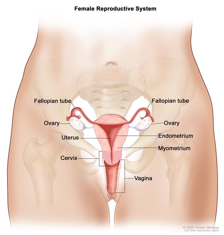 Kako napraviti vaginu vagine